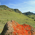 Da5872 Lichen Covered Rock Below Abert Rim by Ed Cooper Photography