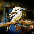 Kookaburra Dacelo Novaeguineae by Mona Stut