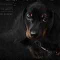 Dachshund - Puppy Love by Maria Astedt