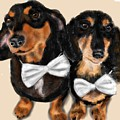 Dachshunds And Bowties by Lois Ivancin Tavaf