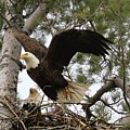 Dad Leaving The Nest by Debbie Storie