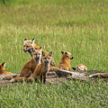 Daddy's Foxy Daycare by Yeates Photography