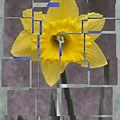 Daffodil 1 by Tim Allen