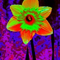 Daffodil 2 by Tim Allen