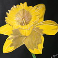 Daffodil by Cathy Jourdan