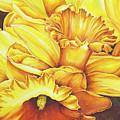 Daffodil Drama by Lori Taylor