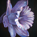 Daffodil by Fiona Jack
