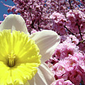 Daffodil Flower Art Prints Pink Tree Blossoms Blue Sky Baslee by Baslee Troutman