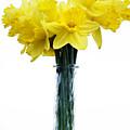 Daffodil by Marilyn Hunt