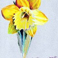 Daffodil by Mindy Newman