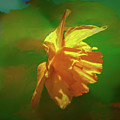 Daffodil On Green Abstract #hh3 by Leif Sohlman