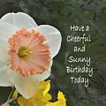 Daffodil Peach And Yellow Birthday  by Debby Pueschel