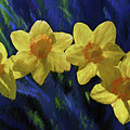 Daffodil Quartet by Jerry Gammon
