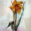 Daffodil by Richard Le Page