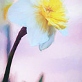 Daffodil Smiling At The Sky by Anita Pollak