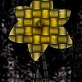 Daffodil Weave by Tim Allen