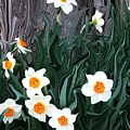 Daffodills by Jim  Darnall