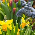 Daffodils 1 by Marcin Rogozinski