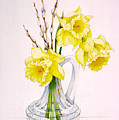 Daffodils And Pussy Willow by Lynette Carrington-Smith
