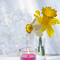 Daffodils And The Candle by Alex Art and Photo