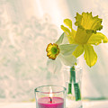 Daffodils And The Candle V3 by Alex Art and Photo