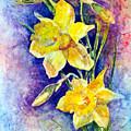 Daffodils by Anne Rhodes