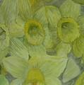 Daffodils by Dan Anning