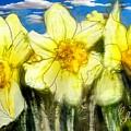 Daffodils by Elaine Weiss