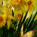 Daffodils - First Flower Of Spring by Carol Cavalaris