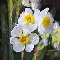 Daffodils In My Garden by Shannon Story