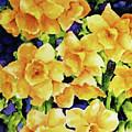 Daffodils by Joshua Englehaupt