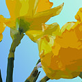 Daffodils by Robert Bissett