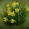 Daffodils by Sandy Keeton