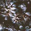 Dahlia Abstraction by Jorgo Photography - Wall Art Gallery
