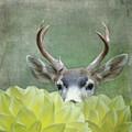 Dahlia Deer by Sally Banfill