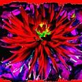 Dahlia Rouge Texture Avec La Frontiere  by Will Borden
