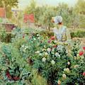 Dahlias by Alfred Glendening