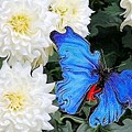 Dahlias And The Butterfly by G Berry