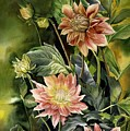 Dahlias In Autumn by Alfred Ng