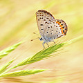 Dainty Butterfly  by Mimi Ditchie