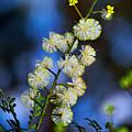 Dainty Wildflowers On Blue Bokeh By Kaye Menner by Kaye Menner