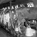 Dairy Farm, C1920 by Granger