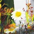 Daisies by Bob Salo