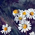 Daisies by Brenda Owen