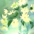 Daisies by Duygu Kivanc