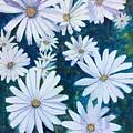 Daisies Galore by Cindy McLean