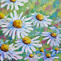 Daisies In Spring by Richard T Pranke