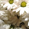 Daisies Make Me Smile by Laura  Grisham