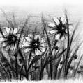 Daisies by Rachel Christine Nowicki