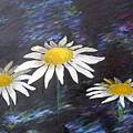 Daisies by Will Felix